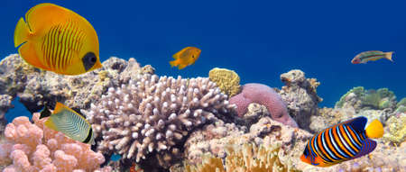 Butterfly Fish and Coral Reef