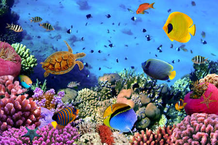 Coral Colony Wall Mural