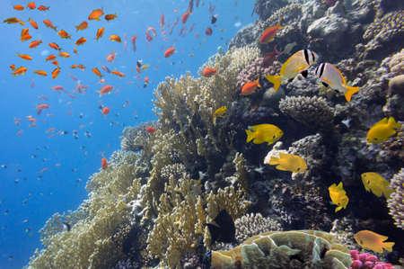 Coral landscape Red Sea, Egypt