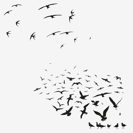 pack of seagulls print