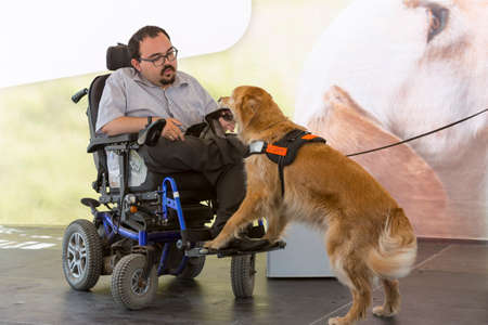 Photo pour Sofia, Bulgaria - June 21, 2016: An assistance dog is shown during a performance before given to an individual with a disability. The animal is trained by an assistance dog organization with the help of a professional trainer. - image libre de droit