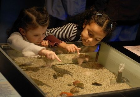 two little girls looking an aquarium in a museum