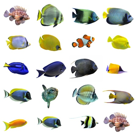 Foto de group of fishes on a white background - Imagen libre de derechos