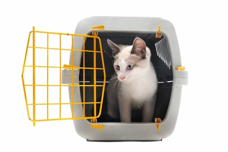 Photo for cat closed inside pet carrier isolated on white background - Royalty Free Image