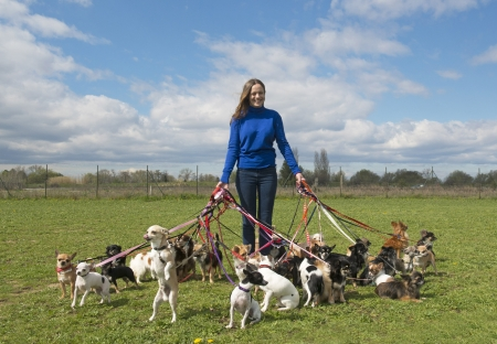 portrait of a woman and a large group of chihuahuas