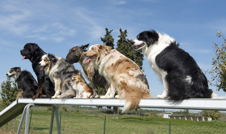group of dogs in a training of agility