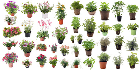 aromatic herbs and flower plants in front of white background