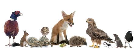 Foto de group of wild animals in Europe in front of white background - Imagen libre de derechos