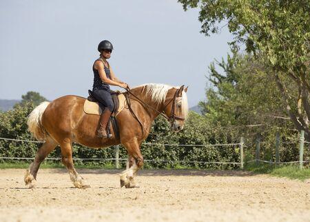 Photo pour riding girl are training her Comtois horse - image libre de droit