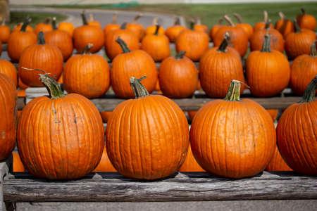 Foto de Rustic outdoor display view of freshly harvested large orange Jack O' Lantern size pumpkins with a neutral sunny background - Imagen libre de derechos