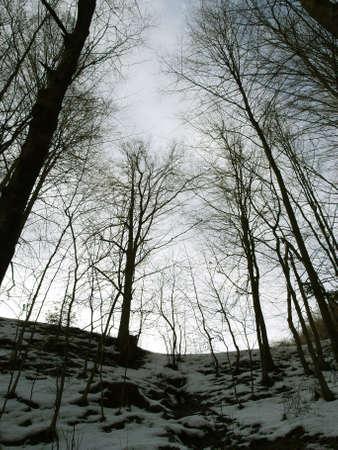 Dark winter forest in the evening