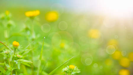 Photo pour summer background. rural summer backgrounds. Abstract natural backgrounds with green grass and beauty bokeh - image libre de droit