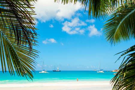 Photo pour Palm and tropical beach - image libre de droit