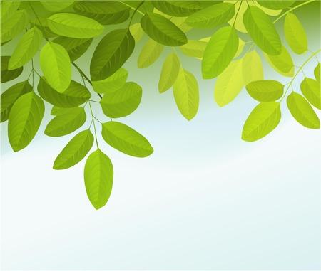 Illustration pour Nature background with tree leaves - image libre de droit