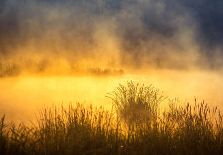 Photo for A beautiful spring sunrise mist over the flooded wetlands. Warm spring scenery of swamp with grass and fog. Beautiful landscape of Northern Europe in springtime. - Royalty Free Image