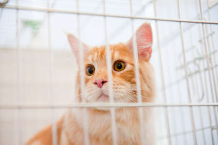 Red cat in a cage behind bars