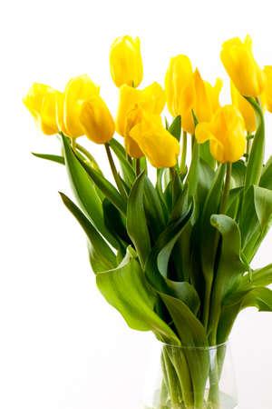 Photo pour yellow tulip on a white background standing in a transparent vase - image libre de droit