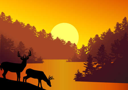 Deer silhouette in the nature
