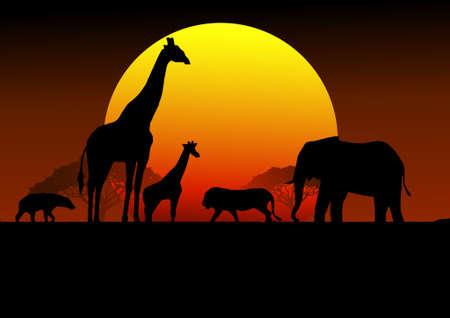 Safari Arica