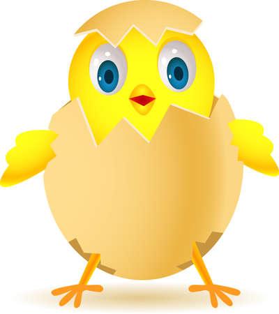 Cute chicken in egg