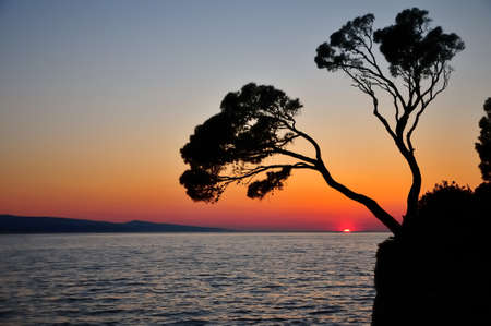brela - two pine trees silhouette s with sunset background la - DSC_6913