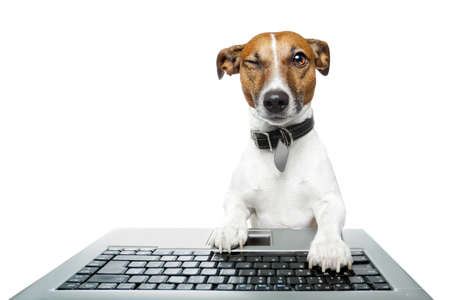 Dog winking and browsing the internet