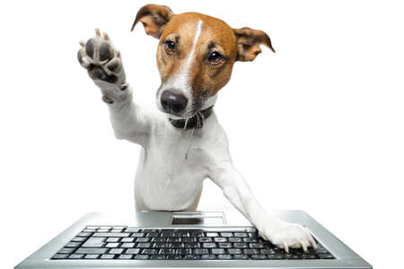 Dog browsing the internet