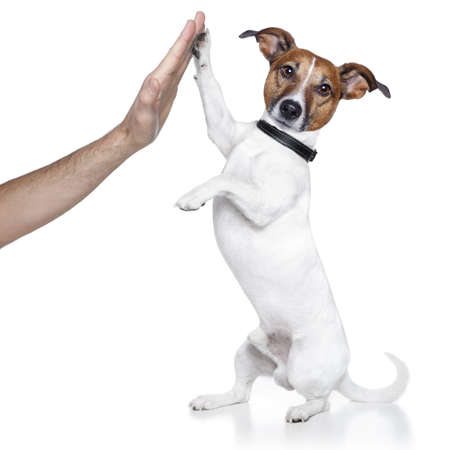 Photo for dog high five - Royalty Free Image