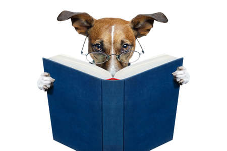 dog reading a blue book