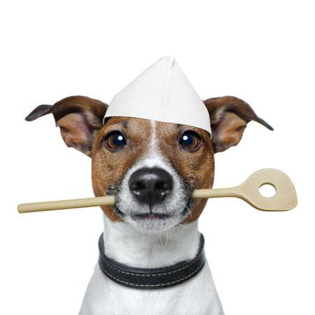 Photo pour dog as chef - image libre de droit
