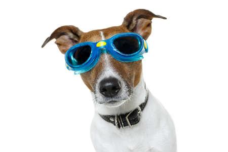 Photo pour dog with goggles - image libre de droit