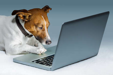 dog  with computer  and browsing the internet