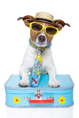 Foto de dog dressed up as a tourist - Imagen libre de derechos