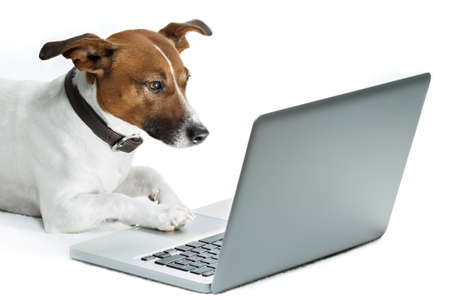 dog with computer browsing the internet