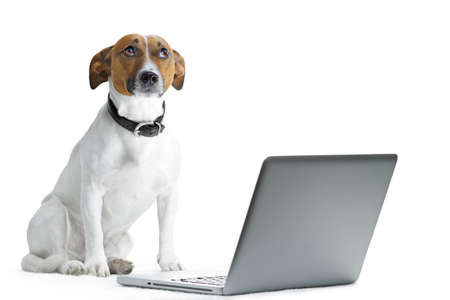 dog with computer and thinking