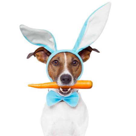 Foto für dog with bunny ears - Lizenzfreies Bild