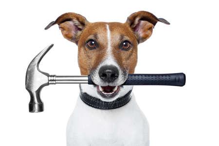 Photo pour handyman dog with hammer - image libre de droit
