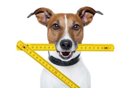 Photo pour handyman dog with  yellow folding ruler - image libre de droit