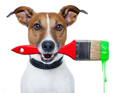 dog with a brush and green color