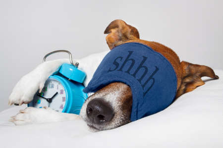 dog with alarm clock and sleeping