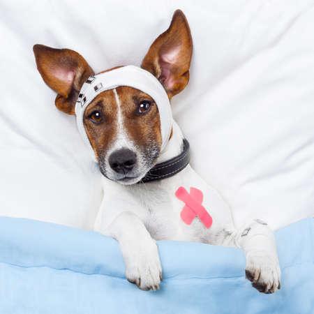 sick dog with bandages