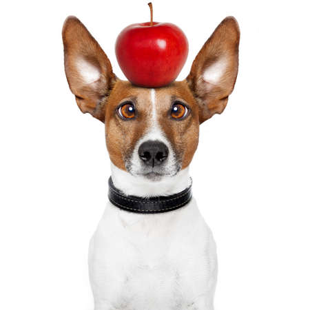 dog with an apple on top