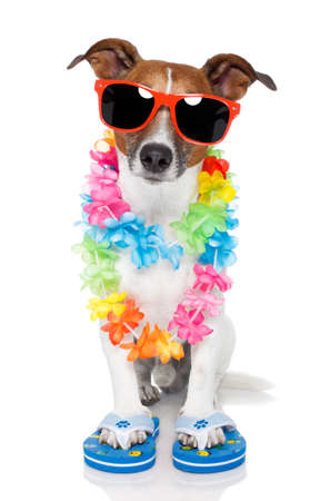 tourist dog with hawaiian  lei