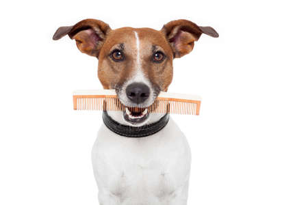 dog with comb