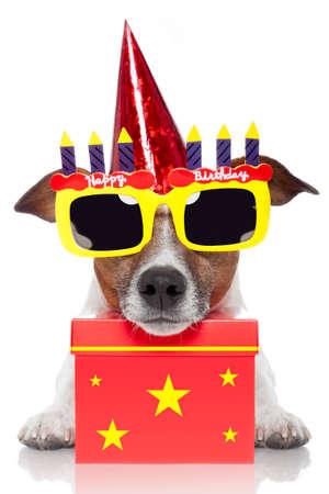 Photo pour birthday dog  - image libre de droit