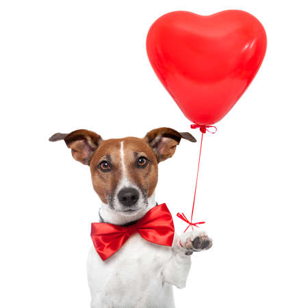 Photo for dog in love with a red heart  balloon - Royalty Free Image