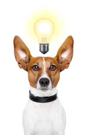 Dog having  great ideas showing a glowing lightbulb
