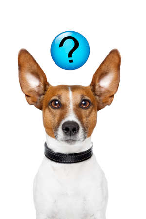 Dog asking  with a question mark on top