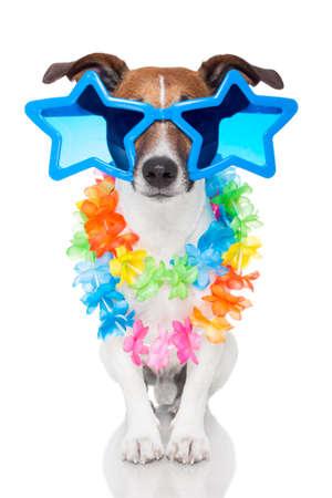 Foto de gay dog with glasses - Imagen libre de derechos