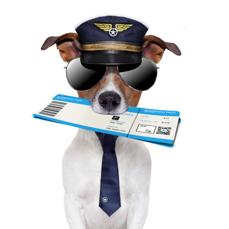 boarding pass dog  with hat and tie